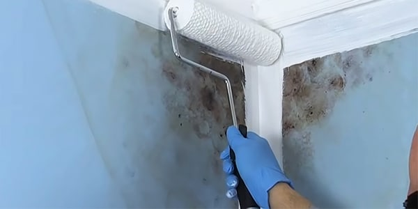 Best Mold Resistant Paints