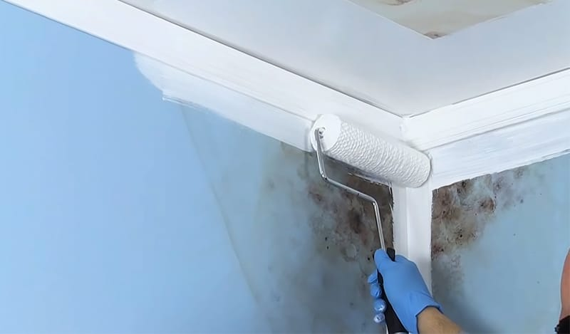 Painting with Mold-Resistant Paint