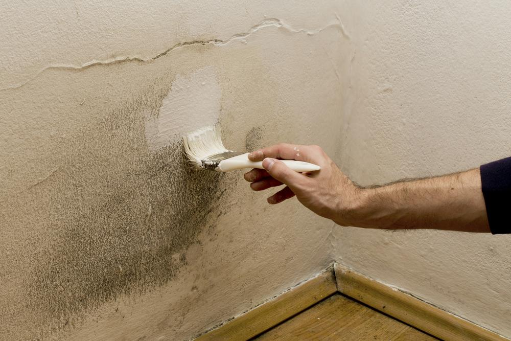 What Is The Best Paint To Prevent Mold
